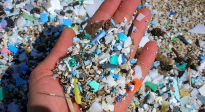 PELIGRO: Microplásticos ya están en la cadena alimenticia humana, según estudio internacional